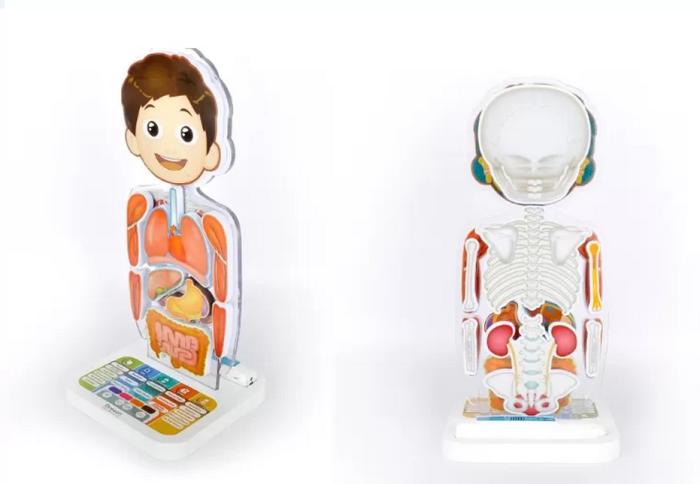 O Smart Anatomy, da Oregon Scientific, é um corpo humano interativo, com mais de 150 pontos de informações sonorizadas. Faz a criança viajar pelos órgãos. Chega ao país em dezembro. A partir de 5 anos.
